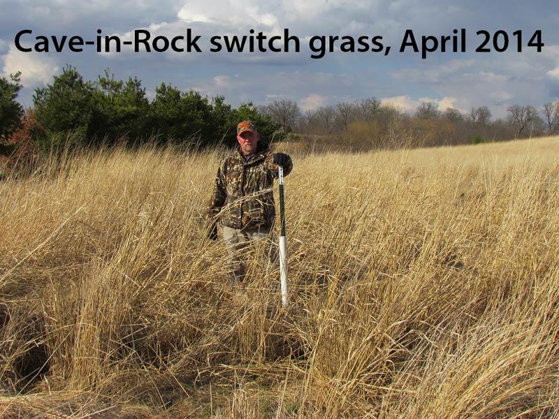 switchgrass-pic-cir